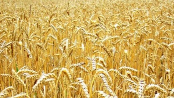 In 2014/15 MY, Kazakhstan to import 550 thsd tonnes of Russian wheat – expert