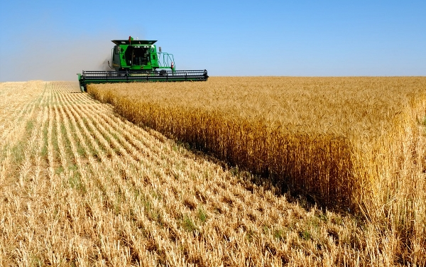 Ukraine started the harvesting campaign of grains